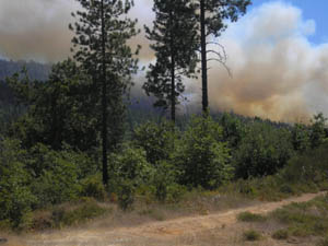 Fire near dirt road