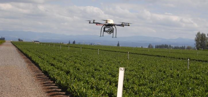 Drone flying over crop
