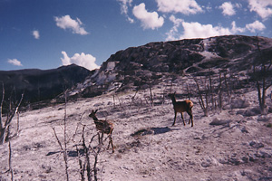 Wildfire and Wildlife Habitat med.jpg